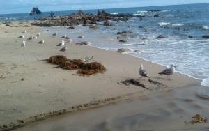 Beach_052215